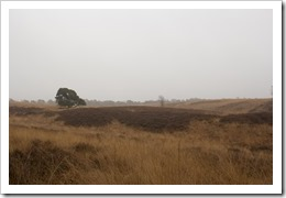 20121219-IMG_0532