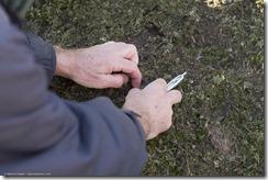 P test op Cladonia brevis
